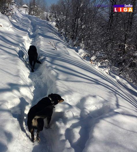 IL-golijski-psi Ledeno doba na Goliji