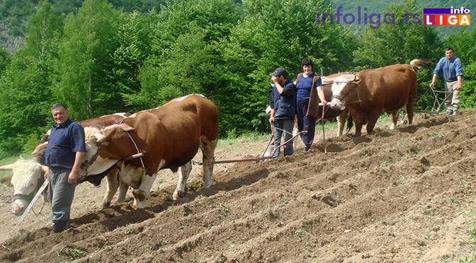Subvencije države u poljoprivredi za ovu godinu