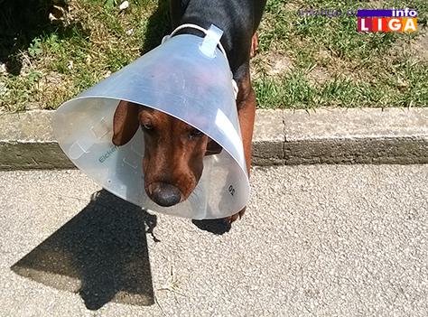 IL-vetas-dar-ordinacija-ivanjica-mali-pas Savremena ordinacija za kućne ljubimce u Ivanjici