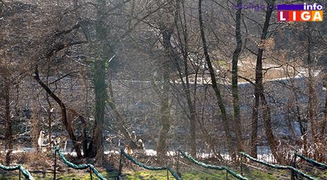 Il-mesto-gde-je-pronadjeno-telo Nađeno beživotno žensko telo u reci Moravici