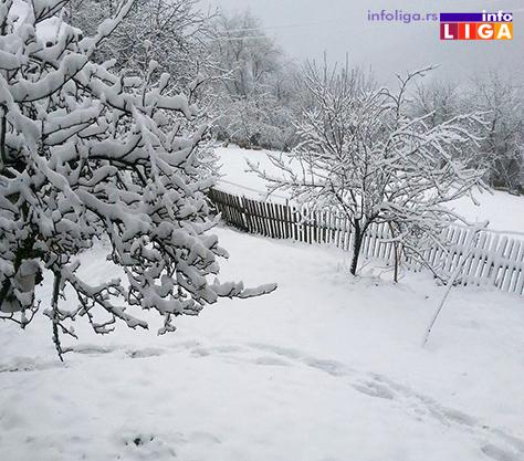 IL-Stradalo-i-voce Proizvođači ogorčeni, sneg dodatno oštetio malinjake