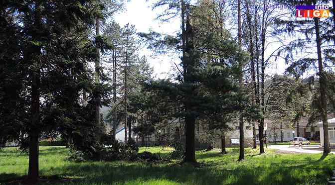 Stara stabla u krugu Doma zdravlja biće posečena zbog bezbednosti