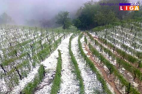 IL-maline-mraz-sneg-grad Povratak zime zabrinuo poljoprivrednike