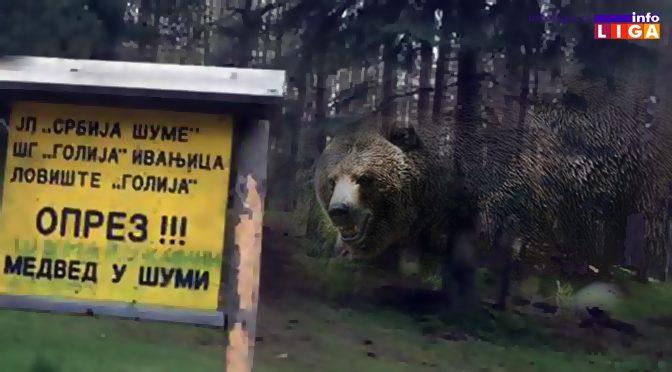 Markovići se odbranili od medveda motornom testerom