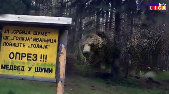 IL-medved-na-goliji Medved ponovo napao! Meštani okoline Arilja zabrinuti (foto)