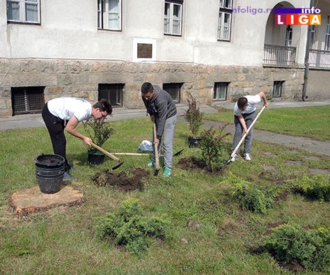 IL-sadnja-drveca-dvoriste-DZ1 Počelo uredjenje kruga Doma zdravlja - volonteri KZM najvredniji