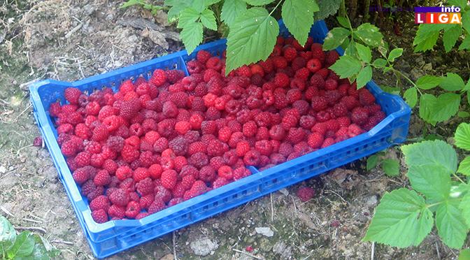 Raspisan konkurs za sadnice malina i poljoprivredne alate