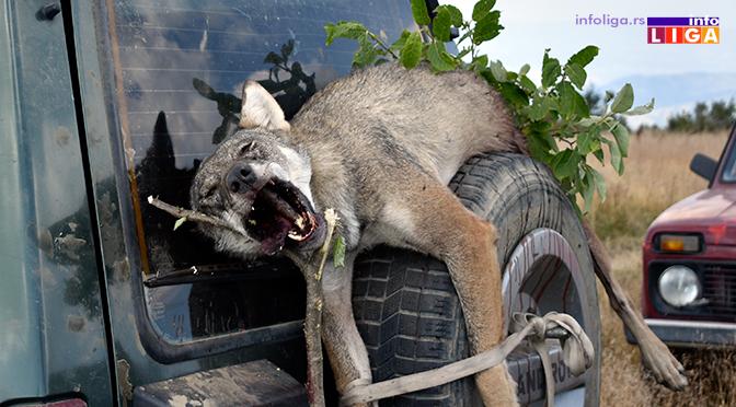 U lovištu Savovo odstreljen vuk