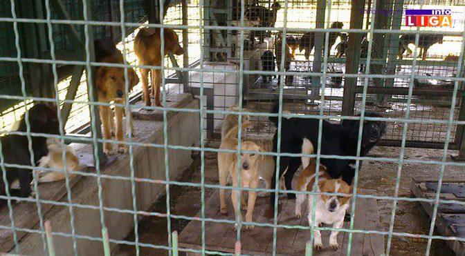 Ivanjica planira izgradnju prihvatilišta za pse lutalice