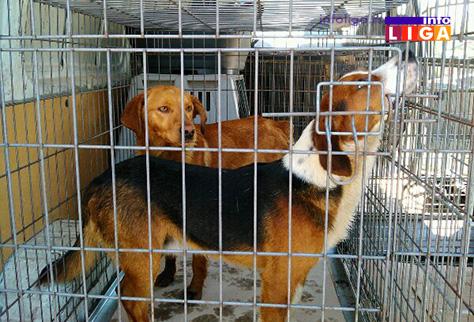 IL-prihvatiliste-za-pse2 Ivanjica planira izgradnju prihvatilišta za pse lutalice