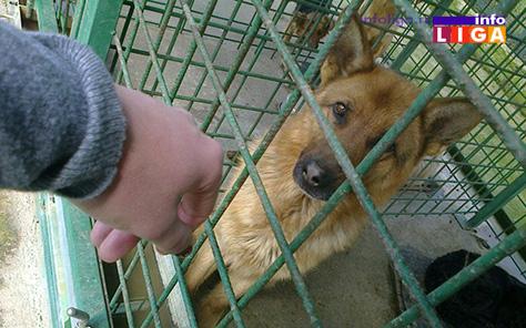 IL-prihvatiliste-za-pse3 Ivanjica planira izgradnju prihvatilišta za pse lutalice