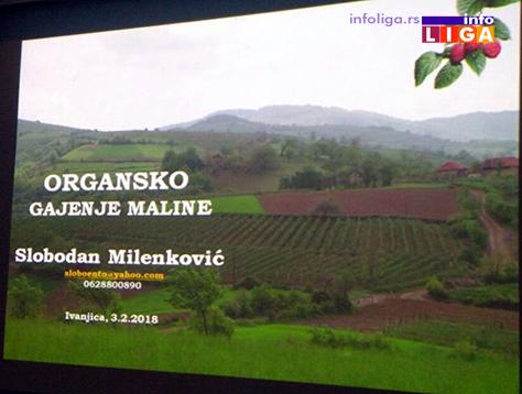 IL-organska-proizvodnja-malina-2 Organska prizvodnja voća može biti budućnost ivanjičke poljoprivrede