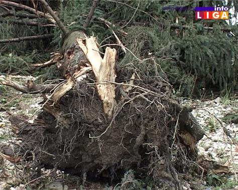 IL-nevreme-vetar-oluja-drvece Jezivo u ivanjičkim selima - Olujni vetar otkrivao krovove, nosio plastenike