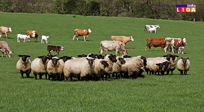 Državne subvencije za najmanje 3 krave i 30 ovaca