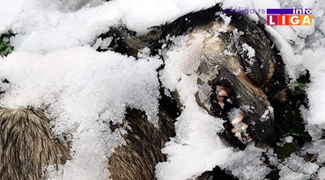 IL-trovanje-pasa STRAVIČNO - U naselju Bele njive leševi otrovanih pasa