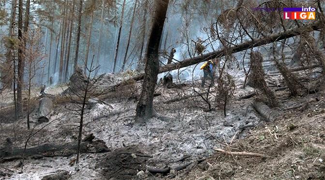 Požar na Goliji progutao 10 hektara šume (VIDEO)