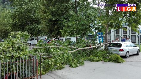 IL-palo-drvo-dom-zdravlja OPREZ - Jak vetar kida granje, nosi crepove