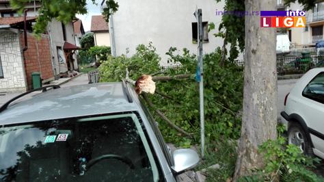 IL-palo-drvo-dom-zdravlja2 OPREZ - Jak vetar kida granje, nosi crepove