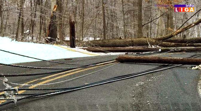 Nestručno oborena stabla pokidala dalekovod – sela bez struje