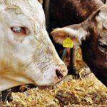 Počela kontrola uslova za držanje životinja