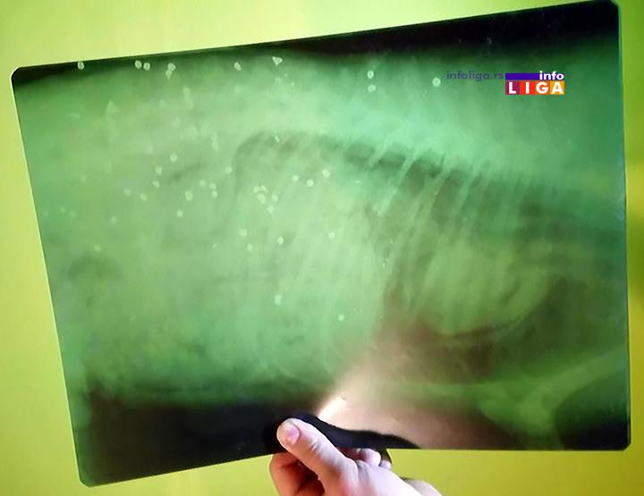 IL-ubijen-pas-snimak Zverski postupak u naselju Lučka reka za svaku osudu (UZNEMIRUJUĆE FOTOGRAFIJE)