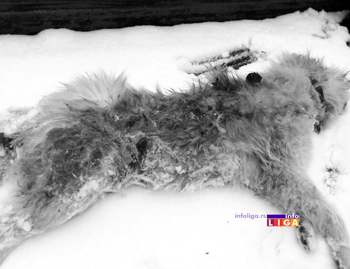 IL-ubijen-pas2 Zverski postupak u naselju Lučka reka za svaku osudu (UZNEMIRUJUĆE FOTOGRAFIJE)