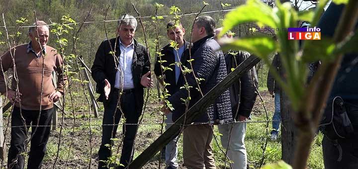 IL-maline-obilazak-vlada-srbije Radna grupa za suzbijanje bolesti malina obišla malinjake u ivanjičkom kraju (VIDEO)