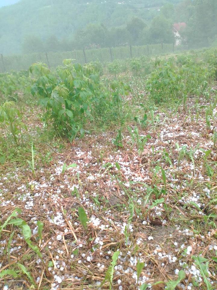IL-grad19-1 Nevreme u Ivanjici - Grad i jaka kiša uništili malinjake i lokalne puteve (VIDEO)
