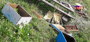 IL-mecka-doruckovala-u-dvoristu-300x142 Ivanjica - Mečka u Mečkama napravila lom