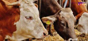 IL-Konkurs-za-krave-300x142 Javni poziv za nabavku stočne hrane i muzilica