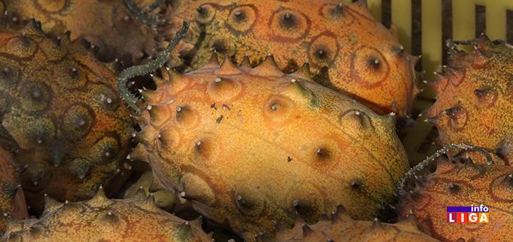 IL-voce Neobična afrička voćka rodila u surovoj klimi ivanjičkih brda (VIDEO)
