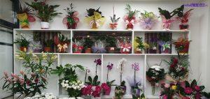 IL-gift-shop-3-300x142 Novootvorena cvećara (Flowers & gift shop) u Ivanjici