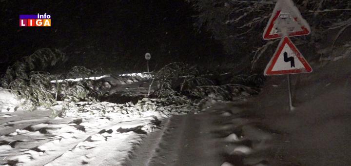 Il-nevreme-sneg-drvo-na-putu- Sneg, oluja i blokirani putevi. Pogledajte kako je večeras izgledalo u okolini Ivanjice (VIDEO)