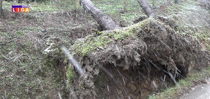 il-drvece-nevreme Oluja u Ivanjici čupala drveće i podizala krovove (VIDEO)