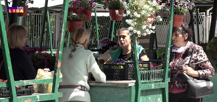 IL-Pijaca-posle-korone- Cveće lek za besparicu (VIDEO)