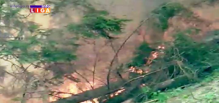 IL-Pozar-Golija-3 Besne požari! Na Goliji vatra zahvatila šumu (VIDEO)