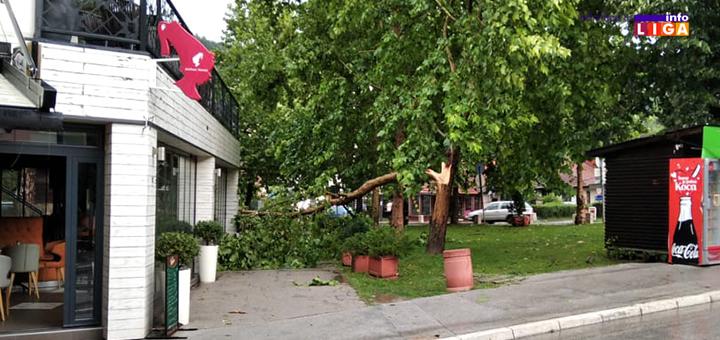 IL-drvo-odvaljeno-grad-2 Oluja i grad veličine pesnice opustošili ivanjičku opštinu (FOTO)