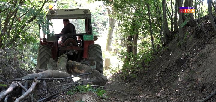 """Težak život drvoseča : """" Prekrstim se tri puta, pa u šumu da zaradim za hleb"""" (VIDEO)"""