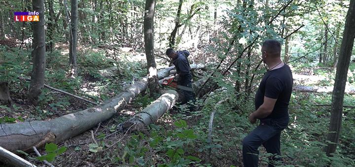 """IL-Drva-izvlacenje-2 Težak život drvoseča : """" Prekrstim se tri puta, pa u šumu da zaradim za hleb"""" (VIDEO)"""