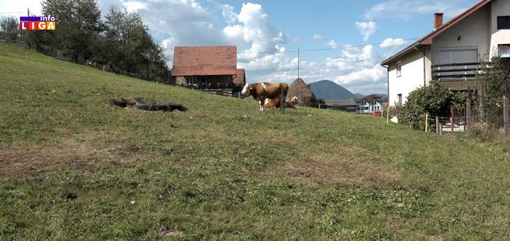 IL-krave- Od Austrijanki u Ivanjici puno se očekuje (VIDEO)
