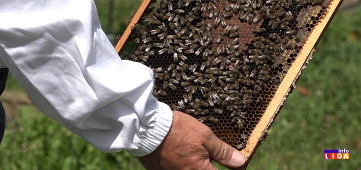 Loša godina za pčelare: Cena meda dobra, ali prinosi četvorostruko manji (VIDEO)