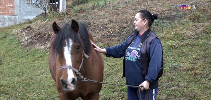 """IL-Meca-konj-Preseka- """"Bako, zašto je medo pojeo konja?"""" - Strah i tuga u ivanjičkom zaseoku Preseka (VIDEO)"""