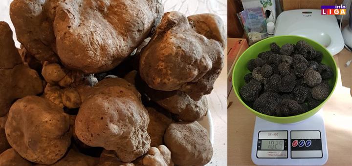 il-tartufi- Jedan od najjačih afrodizijaka na svetu raste i u Ivanjici (VIDEO)