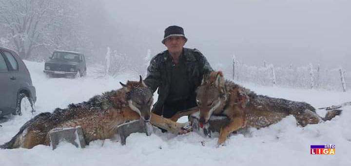 il-vukovi2 Ivanjica: Lovci odstrelili dva vuka koja su pravila ogromne štete (FOTO)
