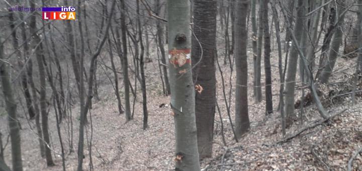IL-Drvece-oynake-unistene Biće nam bolje kada budemo bolji
