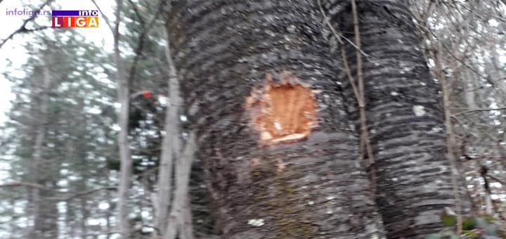 IL-Unisteni-znakovi-na-drvecu Biće nam bolje kada budemo bolji