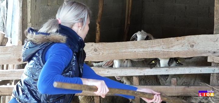 il-ovce Ivanjica: Mila slatke muke na selu ne bi menjala za svu raskoš grada (VIDEO)