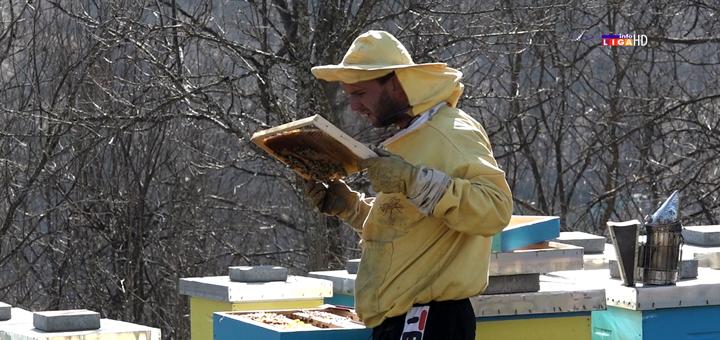 IL-Mladi-pcelar-Markovic Mladi Ivanjičanin razvio ozbiljan posao sa pčelama (VIDEO)