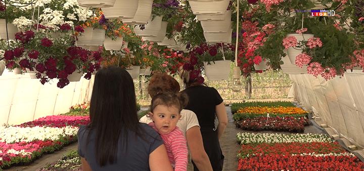 IL-porodica-popovic- Cvetna oaza porodice Popović iz Prilika raj za oči i dušu (VIDEO)