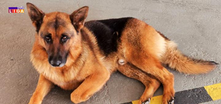 IL-DJango-se-vratio-kuci- Ivanjica: Đango se vraća kući! Dirljiva priča o psu koji je danima lutao tražeći vlasnike (VIDEO)